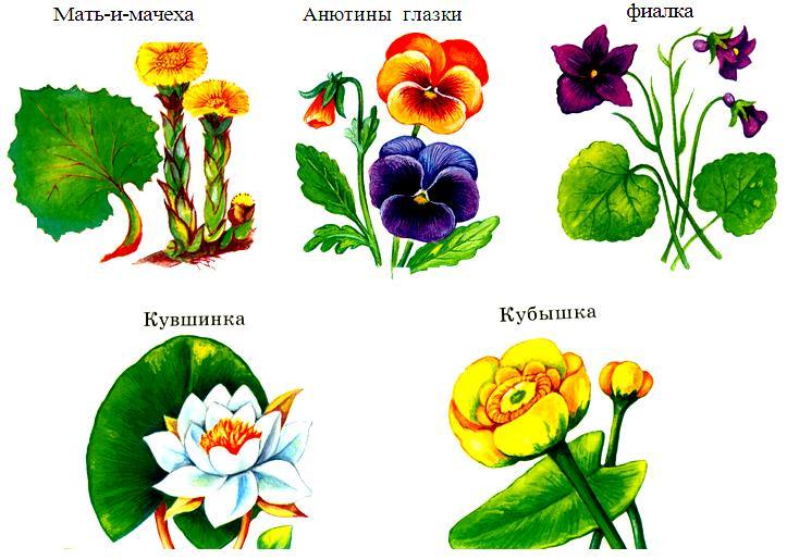 Животные и растения из красной книги